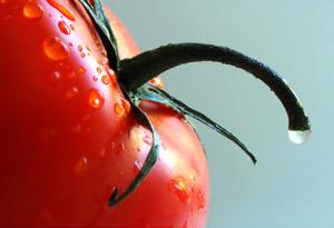 Lista de Alimentos que Curan el Papiloma Humano
