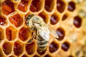 Miel para el herpes zóster